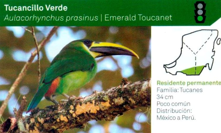 Yucatán must promote a birding culture in the Maya villages