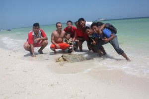 """A Sea Turtle of the """"Carey"""" kind washed up on the shore of Chicxulub"""