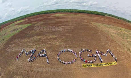 Greenpeace activists and Mayans form a human chain to spell out the words 'ma ogm', which translates as 'no gmo' (genetically modified organisms). Photo: Arturo Rocha/Greenpeace
