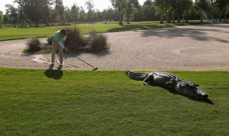 Crocodile at Golf Course in Riviera Maya, Mexico (Photo: Reuters)