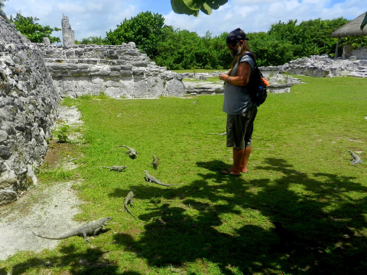 The birds and the iguanas duked it out for the bits of apple at El Rey archaeological site, Cancun (Photo: http://lmaclean.ca/2012/06)