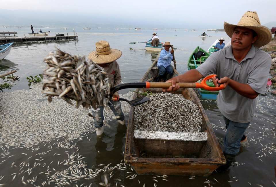 ENVIRONMENTAL CONTINGENCY IS DECLARED IN MEXICO DUE THE DEATH OF FISH IN MEXICAN LAKE