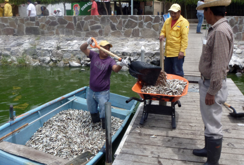 For days, the smell of rotting scales lingered in the air as locals joined government workers to scoop up more than 156 tons of  dead fish