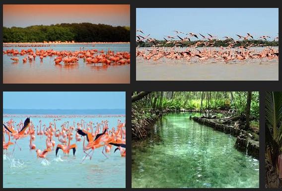 Celestún, Yucatán