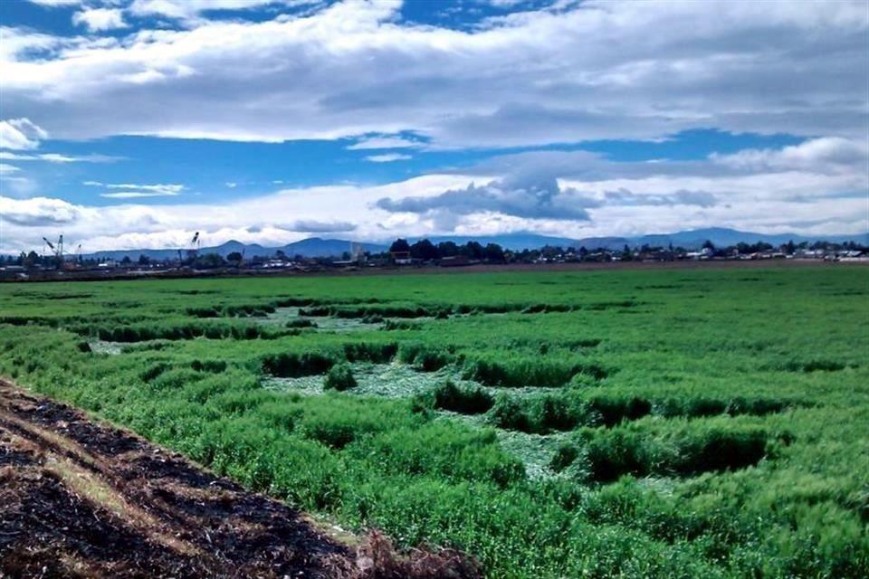 Texcoco Barley Filed (Photo: Google)