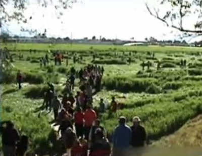 People walking through Barley Field (Photo: Google)