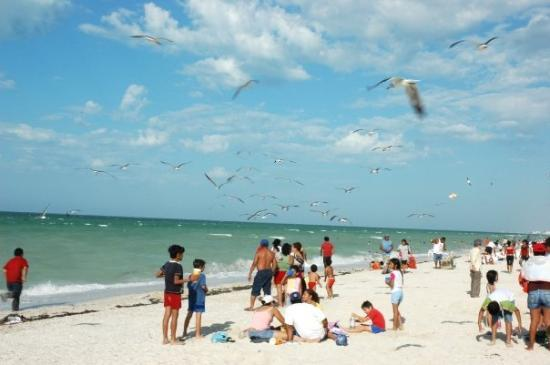 Progreso beach. Photo by Tripadvisor