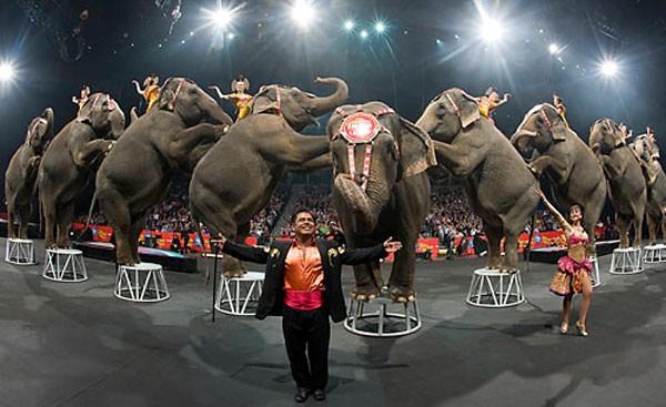 circus-600x367