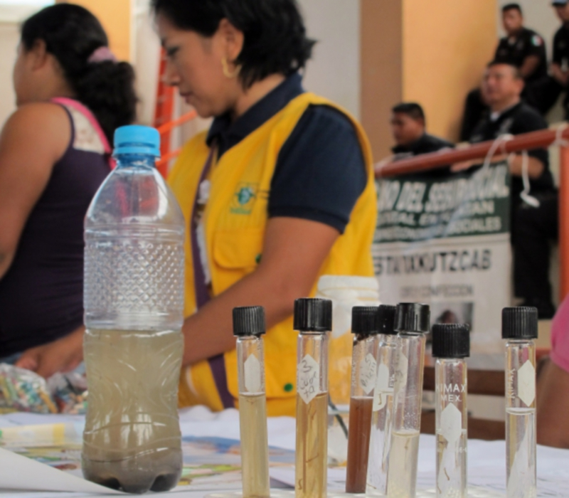 Samples of Aedes aegypti mosquitoe larvae, species known for transmitting the dengue and chikungunya viruses (Photo: yucatan.com.mx)