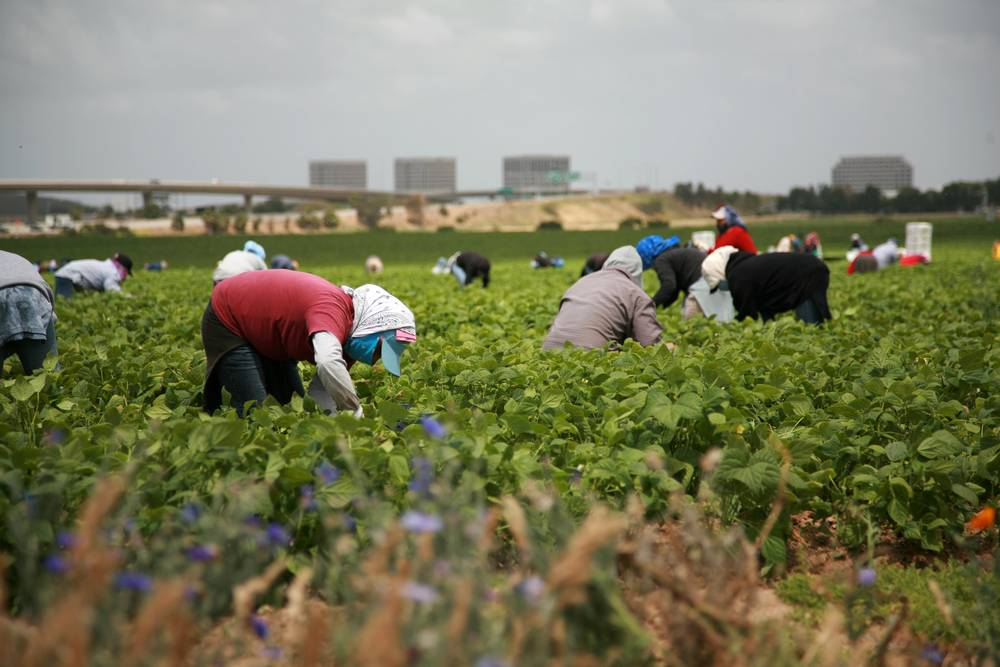 Seasonal migrant workers in Canada (Photo: Google)