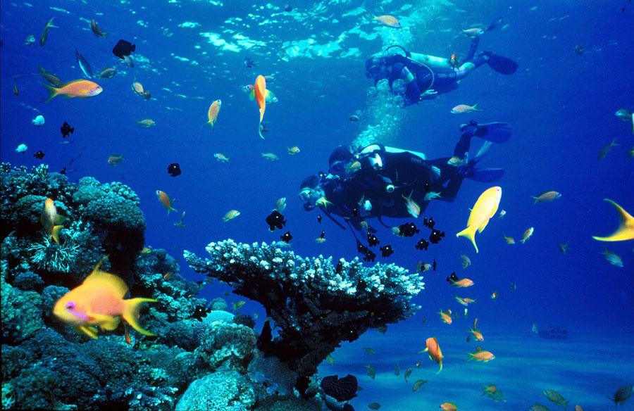 Snorkeling in Mahahual (Google)
