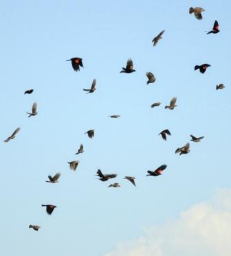 A mixed flock