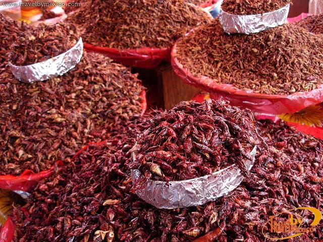 Grasshoppers in Oaxaca, Mexico (Photo: Google)