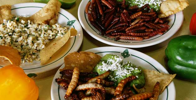 Escamoles and Maguey Worms (Photo: mexicodesconocido.com.mx)
