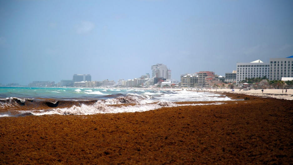 Large quantities of seaweed blanket the beach in the Mexican resort city of Cancun. (Photo: Credit: Israel Leal/AP )
