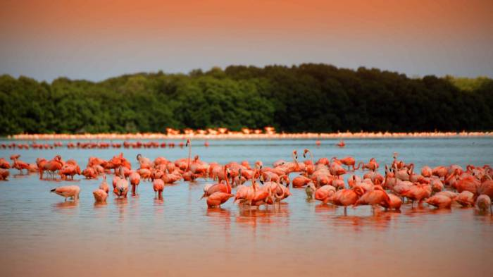 Flamingos in Celestun, Yucatan (Photo: SIPSE)