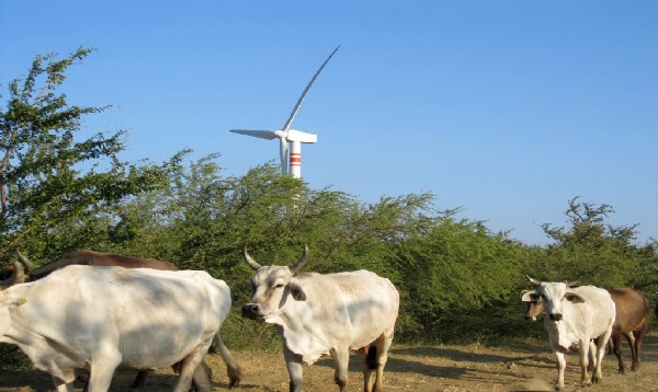 Wind turbines tower over cattle near the town of La Venta, in Mexico's Isthmus of Tehuantepec. Opponents of the proposed Eolica del Sur project complain that wind farms have ill effects on fishing and agriculture (Photo: Banderas News)