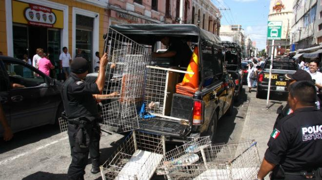 PGR seized pirated items. (Photo: UnionYucatan)