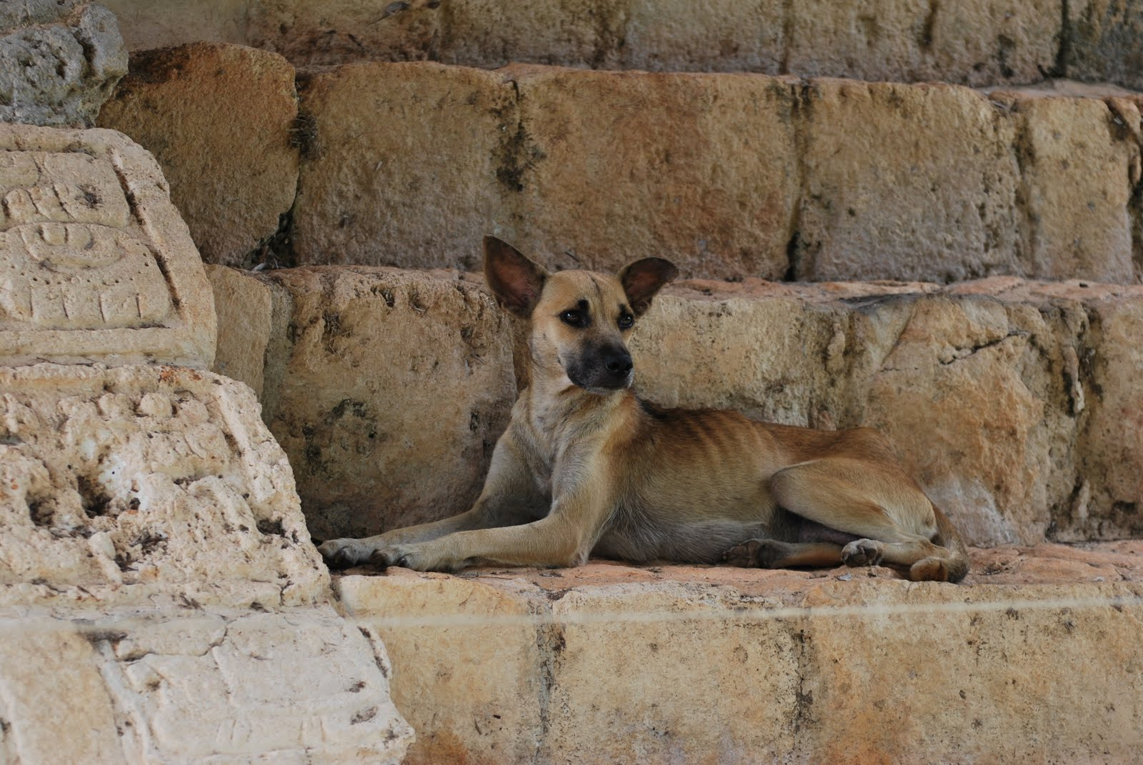 an analysis of the stray dog Analysis of literary element: the stray dog focuses on love, kindness, and compassion we see a stray dog who is nothing but happy to play with a family of strangers.