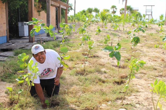 A member of the confederacion obrera revolucionaria planting trees in Playa del Carmen (Photo: SIPSE)