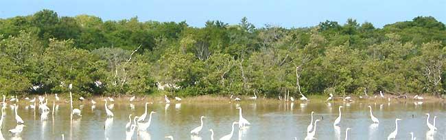 mangrove_telchac