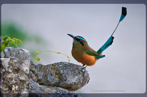 Photo: divem.wordpress.com Yucatan's Toh, a native bird species.