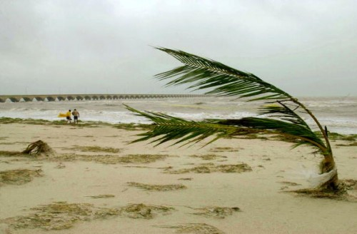 Photo:  Susana Gonzalez/Getty Images) Winds fold a palm tree in half as Hurricane Isidore plowed across the state of Yucatan on September 23, 2002.