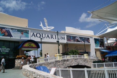 Four sharks in captivity were found dead at Cancun's Interactive Aquarium. (Photo: riviera-maya-news.com)