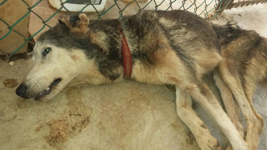 Lobo/Woofie