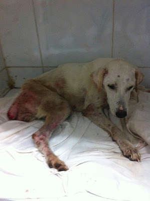 PHOTO:  Jan.22, 2014. The day Paty was rescued from Evolucion