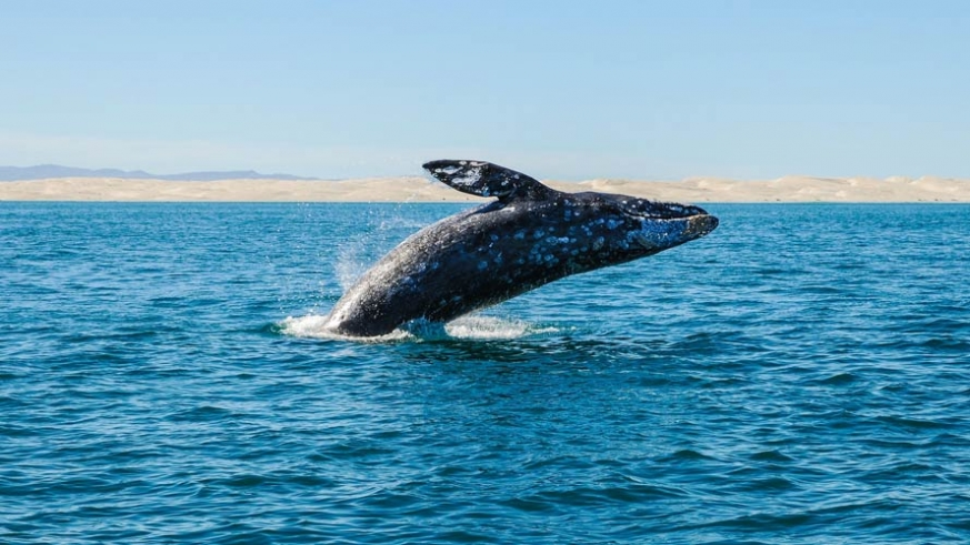 Baja California Whale Tours