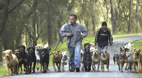 Cesar Millan (Photo: Jayson Mellom / Associated Press)