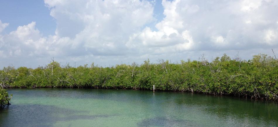 Nichupté Mangroves, Cancun, Quintana Roo (Photo: visitmexico.com)