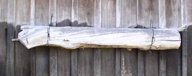 A-piece-of-hollow-log-provides-a-home-for-meliponine-bees. (Photo: Wikipedia)
