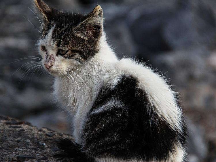 feral-cat2