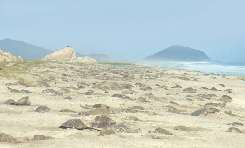 Specialists conducted autopsies on turtles found dead in Oaxaca's coast. (PHOTO: SPECIAL TO THE NEWS)
