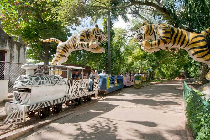 Zoologico Centenario Merida (Photo: Sipse)