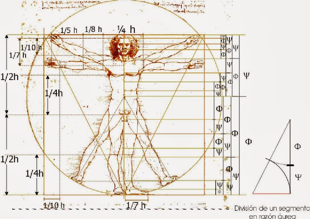 Man of Vetruvio by Da Vinci