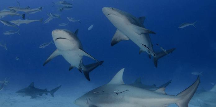 SharkSchool-696x347