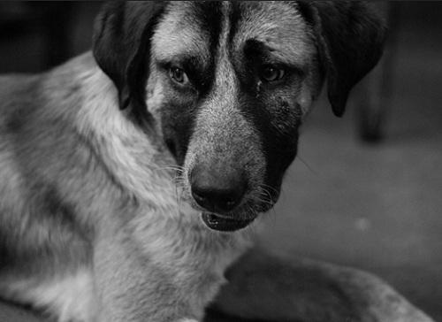 dogsos_2