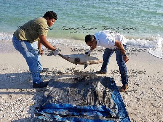 Photo: yucatan.com.mx
