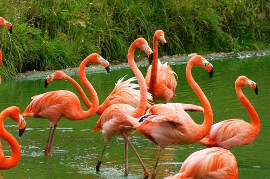 flamingo 12.