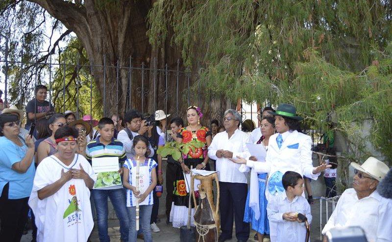Environmentalist 'weds' 1,000-year-old Tule Tree in Oaxaca, Mexico