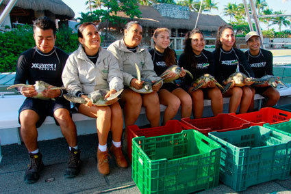 Xcaret staff aid in rehabilitation of injured sea turtles. (PHOTO: riviera-maya-news.com)