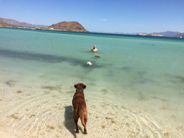 Man and dogs at Playa Santispak, Baja California. (PHOTO: Chuck Bolotin)