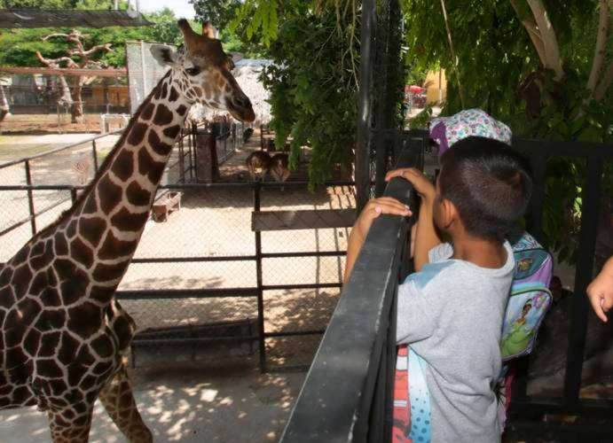 Centenario Zoo in Merida has been cleared of animal mistreatment. (PHOTO: sipse.com)