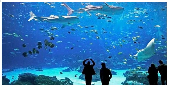 According to Miguel Angel García Beltrán, General Director of the Port Authority, Puerto Vallarta's aquarium will include glass tunnels that allow visitors to see most all of the marine species within. (Photo: banderasnews.com)