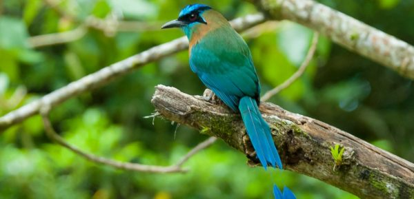 Motmot. PHOTO: © David Schenfeld