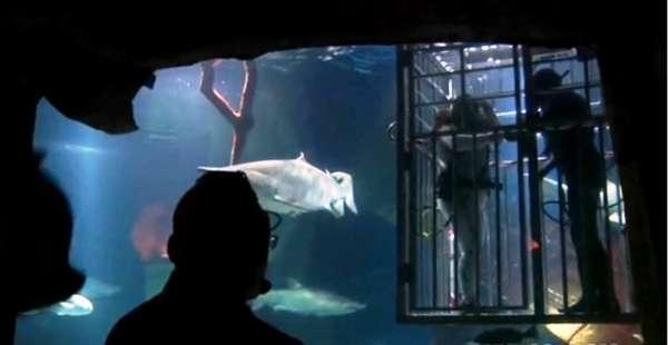 Shark Tank Wedding (NY Post)