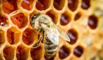 abejas-producen-la-miel